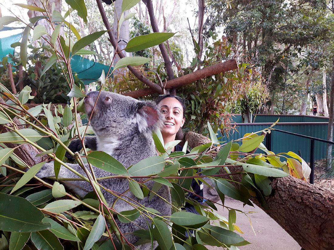 Santuario de vida salvaje en Currumbin en la Gold Coast, Australia
