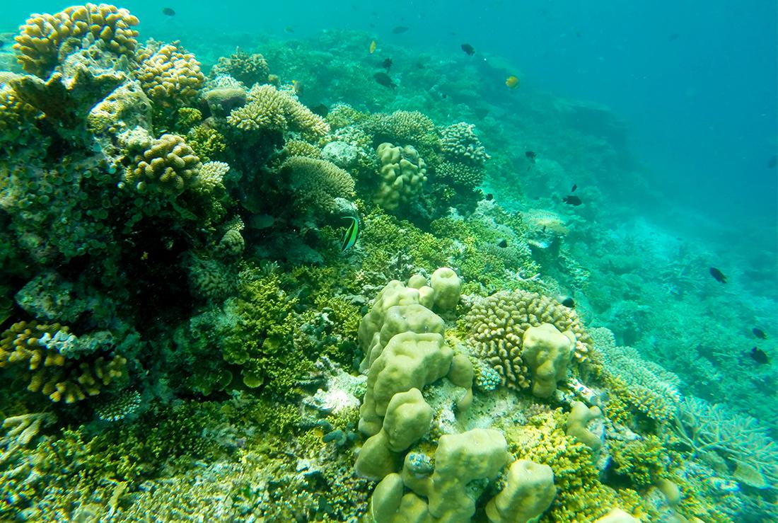 Arrecife atolon Sur de Male