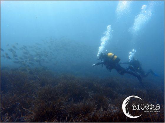 Buceo con bancos de peces en Cabo de Palos