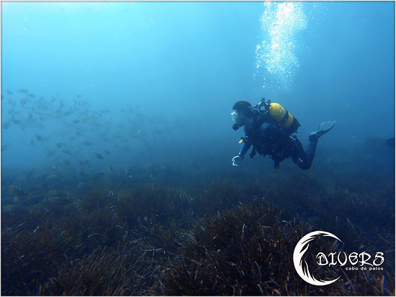Buceando los peces se observan mejor que haciendo snorkel.