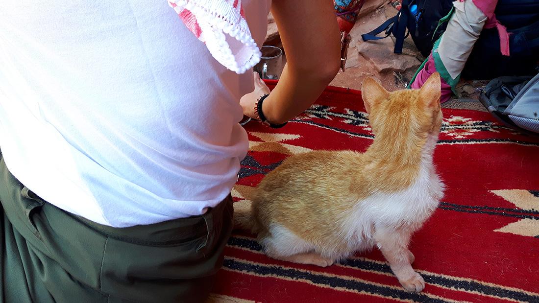 Gato en la teteria del mirador del Tesoro Petra
