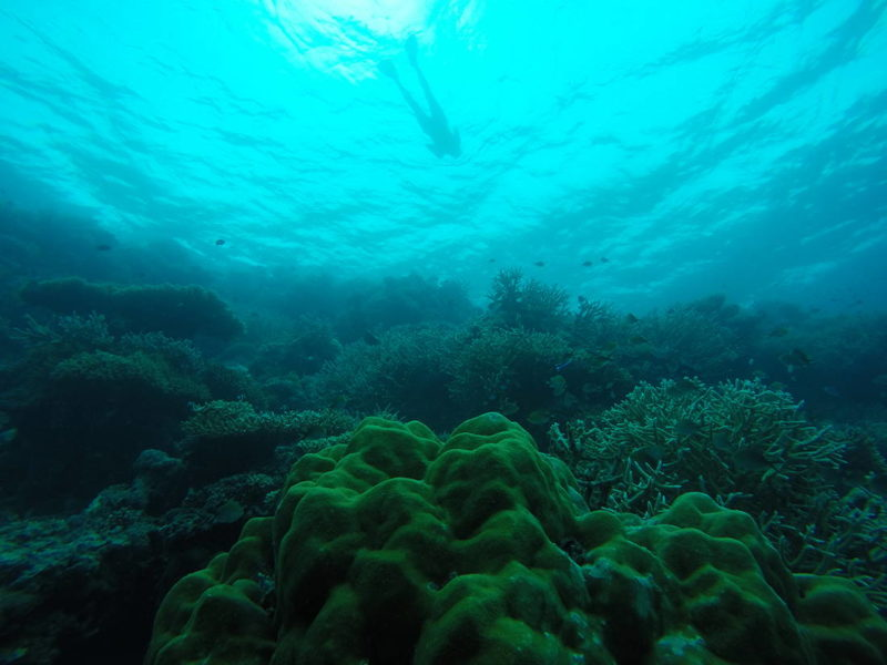 Natalia vista desde la empinada pared del arrecife, Atolón Sur de Malé