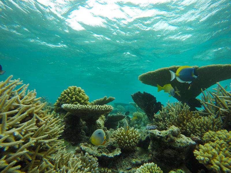 Arrecife en el atolón Sur de Malé