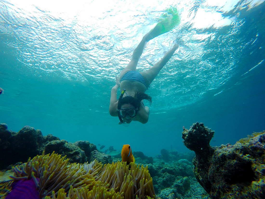 Pez payaso en Maldivas