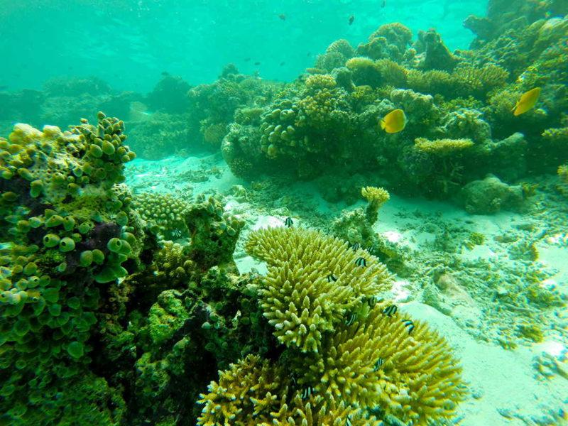 Snorkel en el atolón Sur de Malé, Maldivas