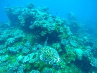 Tortuga en arrecife de Maldivas