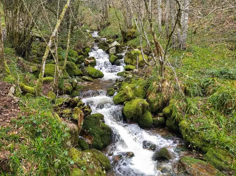 Rio en el bosque de Muniellos