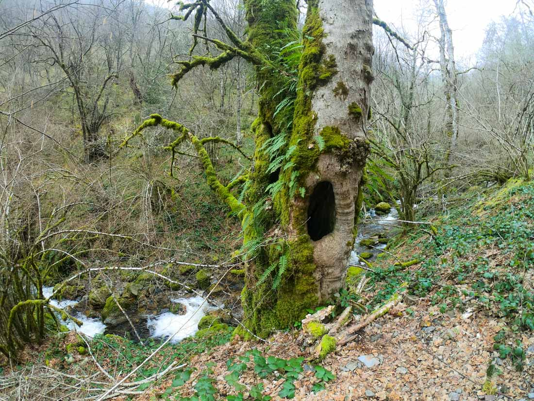 Muniellos es un bosque de cuento de hadas