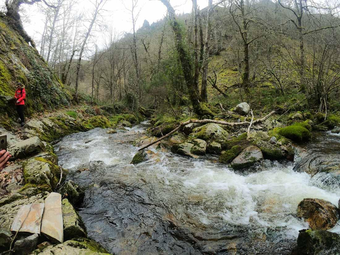 Ruta del rio en bosque de Muniellos