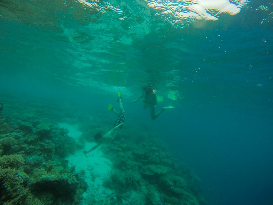 Snorkel en atolón Sur de Malé Maldivas