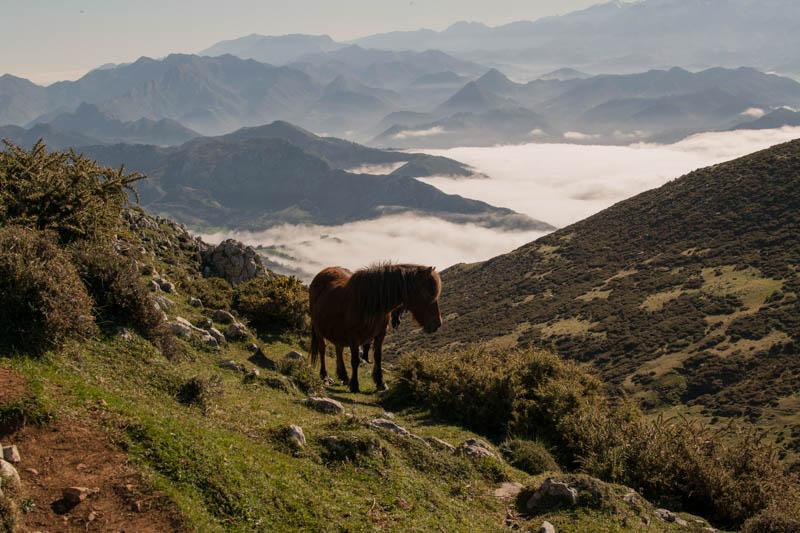 Picu Pienzu Asturias