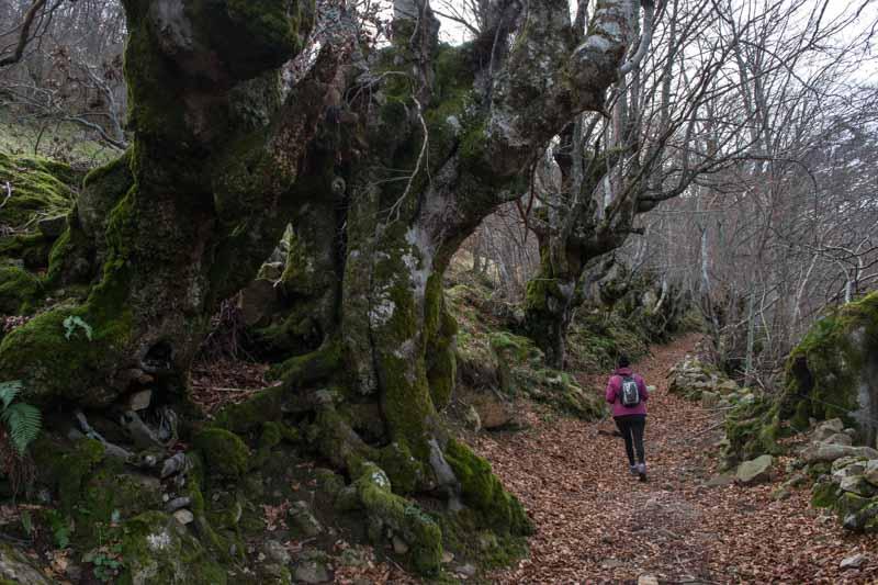 Redes en Asturias