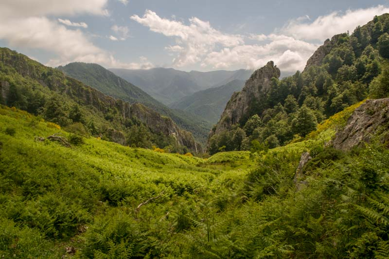Garrapatas en Asturias