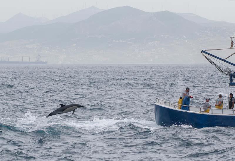 Delfín cerca de barco de pesca en Tarifa Cádiz