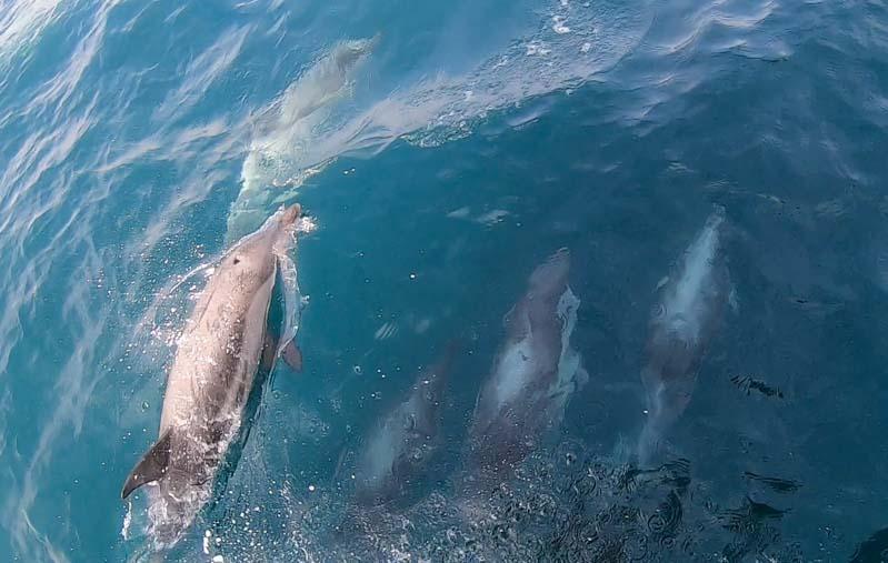 Delfines en Tarifa Estrecho Gibraltar
