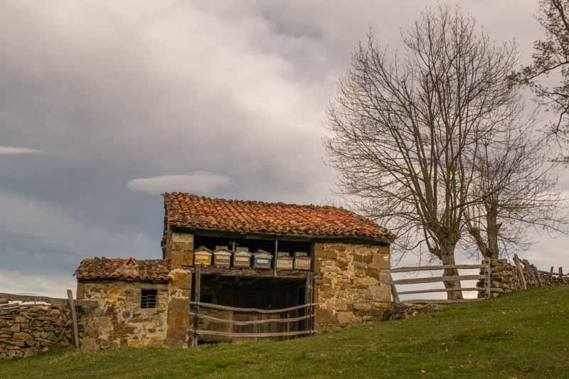 Colmenas de abejas en Asturias