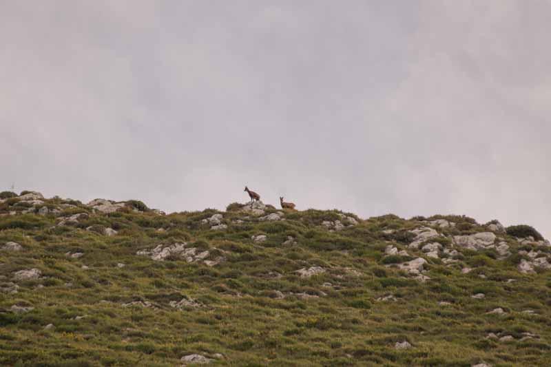 Rebecos en Asturias, Parque de Redes