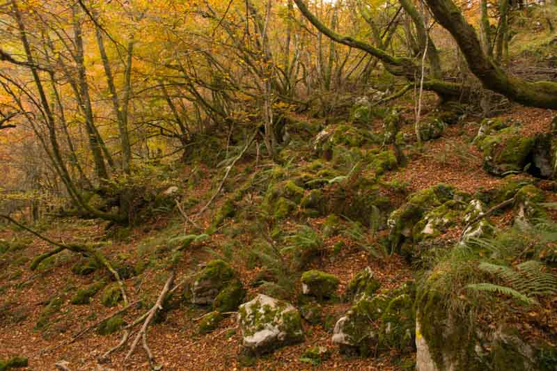 Rutas en Redes bosque al Cuyargallos