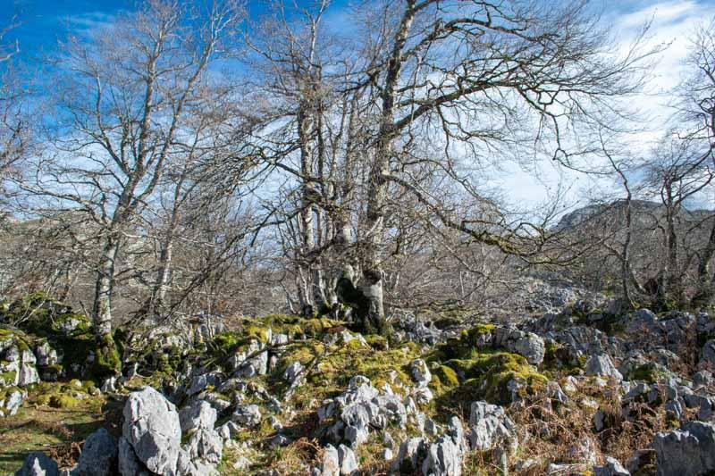 Bosque Palomberu Picos de Europa