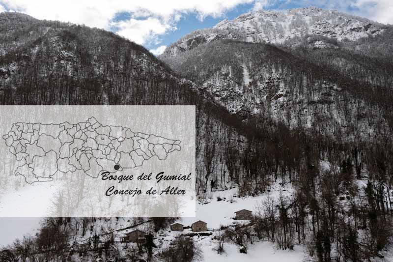 Situación del bosque del Gumial en el mapa de Asturias