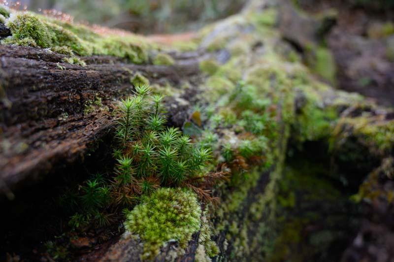Bosque en Covadonga Asturias