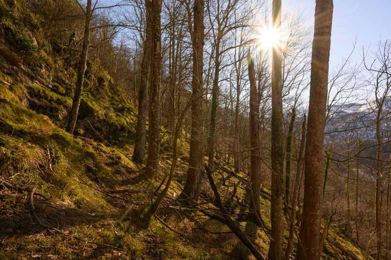 Bosque en Covadonga en la ruta a la Cruz de Priena