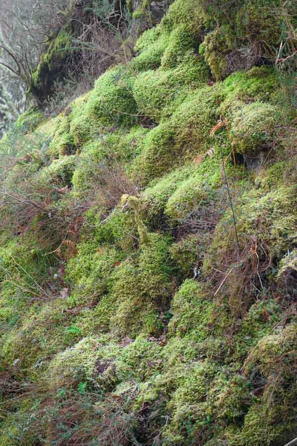 Bosque en ruta a la Cruz de Priena en Covadonga Asturias