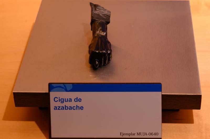 Cigua de azabache del Museo del Jurásico Asturias