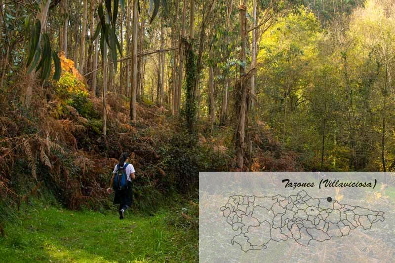 Ruta del azabache desde Tazones en mapa de Asturias