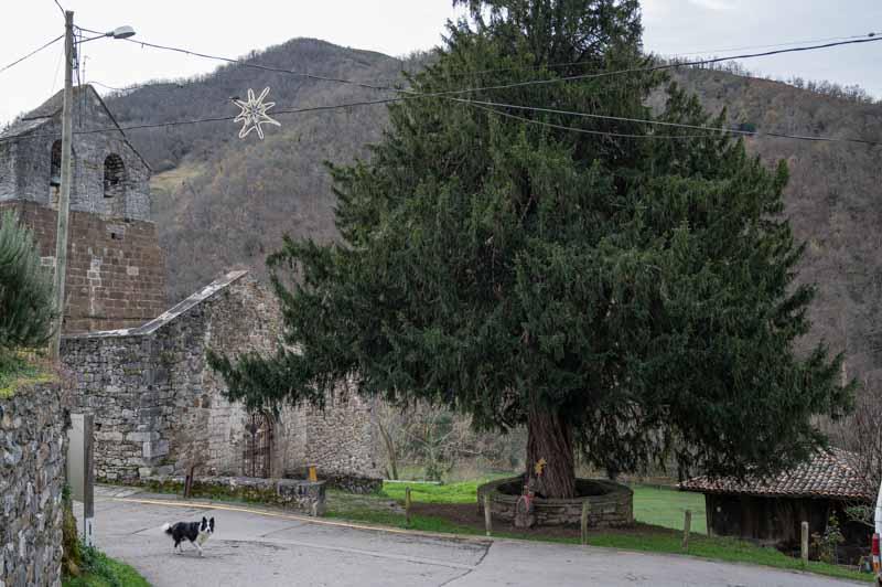 Santibáñez tejo centenario