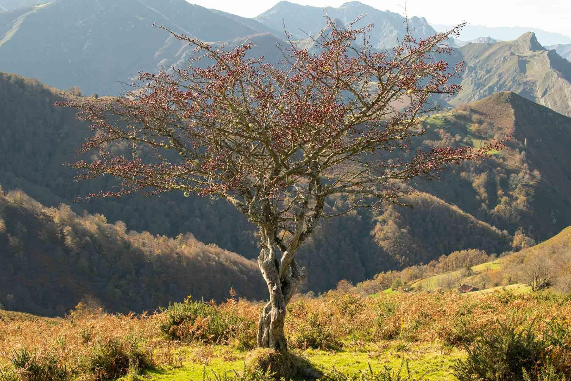 Paisaje de montaña en Parque Natural de Redes