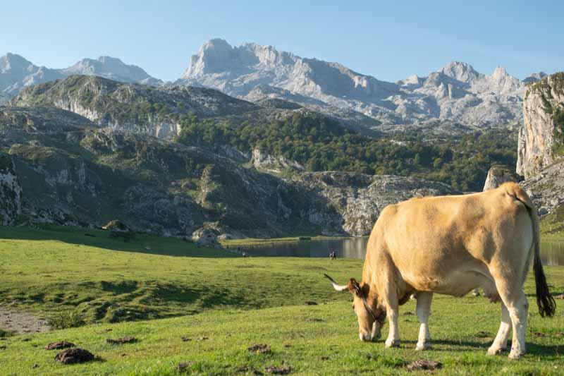 Subir a los Lagos de Covadonga