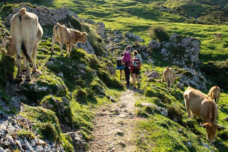Ruta a Vega de Ario desde los Lagos de Covadonga, Picos de Europa