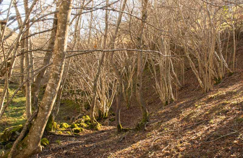 Bosque en la ruta de Bulnes a Pandébano