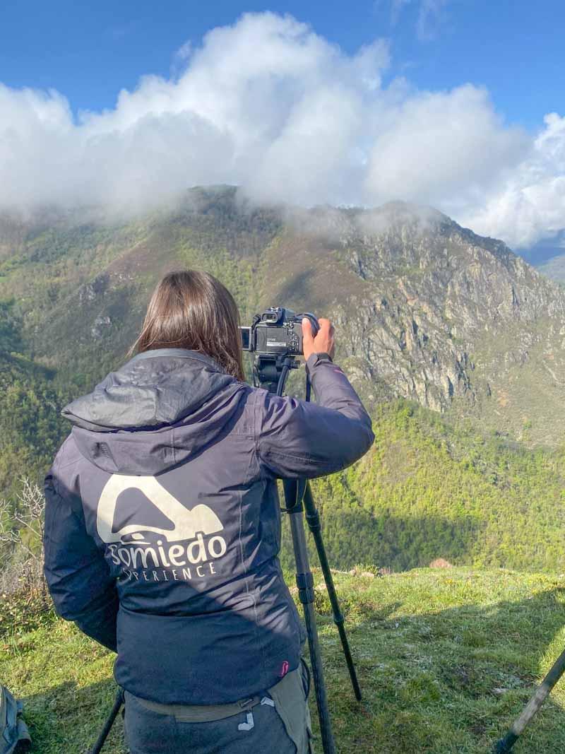Ver Osos pardos en Asturias